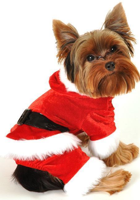 Are your pet ready for winter holidays?