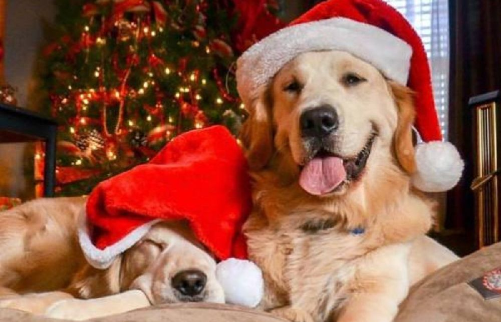 A bunch of gifts for your pet
